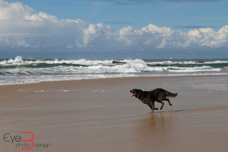 Dog at Nobbys Beach